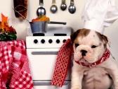 O poreklu i sastavu proteina – Najbolja ishrana pasa i mačaka
