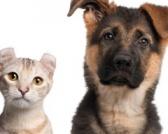Opasnost od veštačkih konzervansa u hrani za pse i mačke