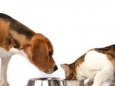 Uloga proteina u kvalitetnoj ishrani pasa i mačaka