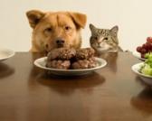 Šta su BHA, BHT i etoksikvin? / Veštački konzervansi u ishrani životinja