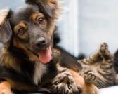 Hrana za pse i mačke- kako birati? Ili: ono što platite, to i dobijete