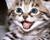 Hrana za mačke – najbolji izbor
