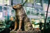 Hačiko – dirljiva i istinita priča o psu i psećoj vernosti