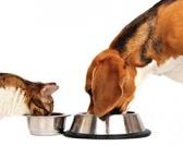 Pravilan izbor kvalitetne hrane za pse i mačke