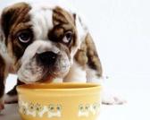 Šta psi nikako ne bi smeli jesti