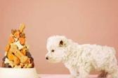 Šta su kelirani vitamini i minerali u hrani za ljubimce?