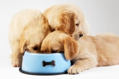 Kako proveriti da li je hrana za pse i mačke koju kupujemo kvalitetna?/Pravilno čitanje deklaracije